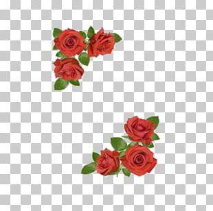 Rose Flower Floral Design PNG