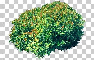 Shrub Poster PNG