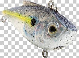 Sardine Spoon Lure Oily Fish Milkfish PNG