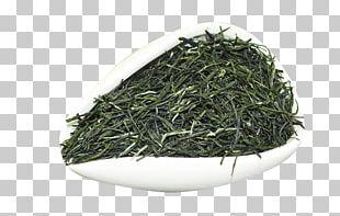 Xinyang Maojian Tea Xinyang Maojian Tea Gyokuro Green Tea PNG