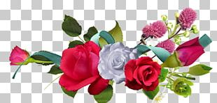 Rose Portable Network Graphics Flower Red PNG