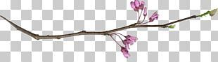 Twig Plant Stem Cut Flowers Pink M PNG