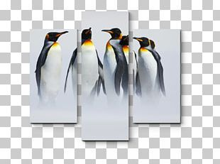 King Penguin Antarctica PNG