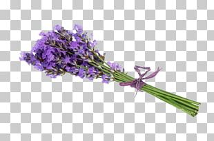 Lavender Flower Stock Photography Getty S PNG