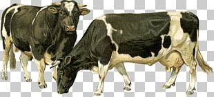 Dairy Cattle Ox Goat Bull PNG