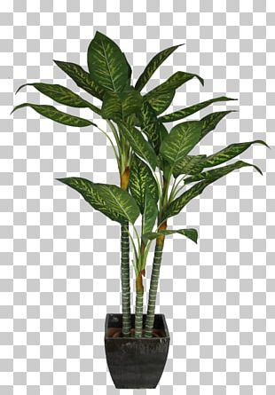 Dracaena Fragrans Houseplant Interior Design Services PNG