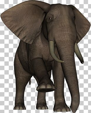 Indian Elephant African Elephant Wildlife Elephantidae Terrestrial Animal PNG