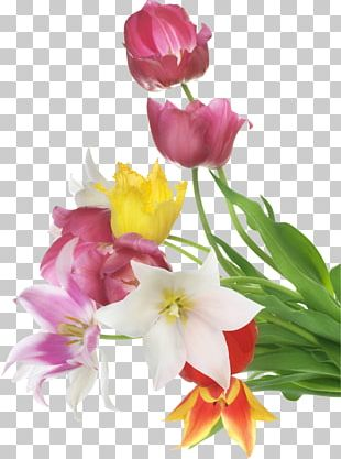 Stock Photography Flower Tulip PNG