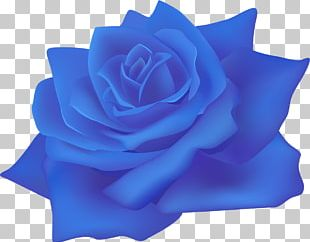 Beach Rose Centifolia Roses Paper Flower Blue Rose PNG