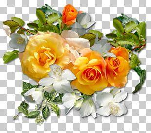 Garden Roses Portable Network Graphics Flower Blog PNG
