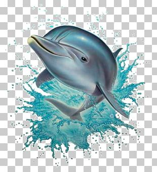 Common Bottlenose Dolphin PNG