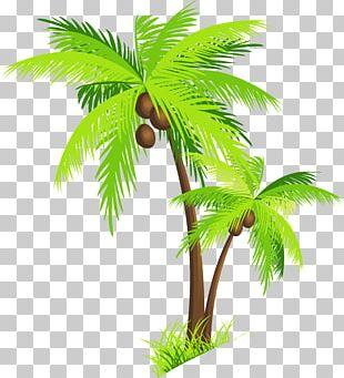 Arecaceae Coconut PNG