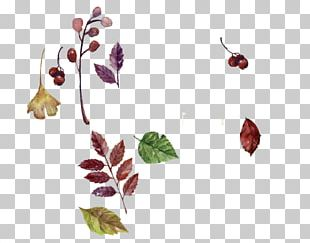 Watercolor Painting Autumn Deciduous PNG