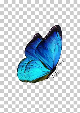 Butterfly Samsung Galaxy S8 Karner Blue PNG