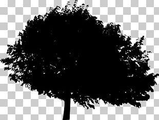 Tree Silhouette Desktop Woody Plant PNG