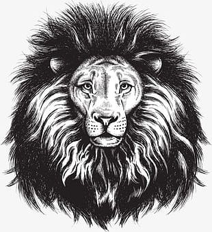 Painted Lion Head PNG