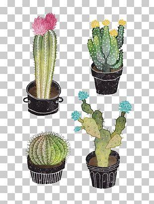 Cactaceae Drawing Succulent Plant Illustration PNG