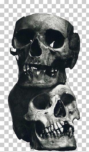 Still Life Photography Skull Photographer Art PNG