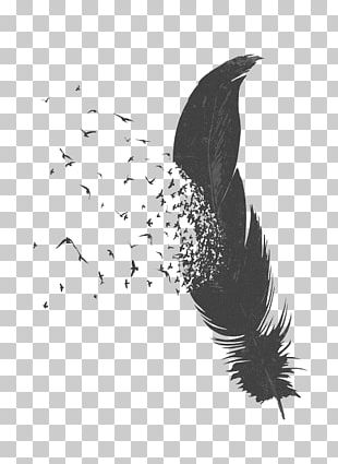 Bird Feather Drawing PNG