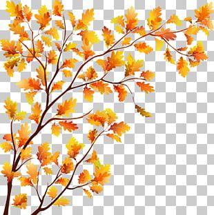 Tree Autumn Leaf PNG