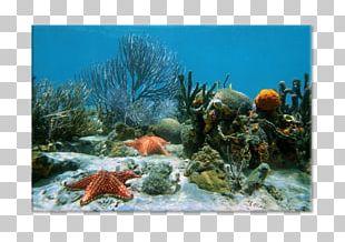 World Ocean Coral Reef Underwater PNG