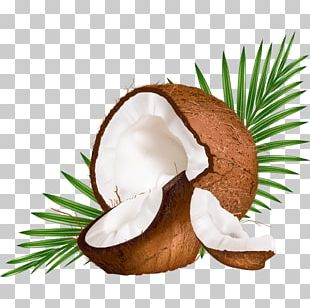 Coconut Milk Coconut Water Euclidean PNG