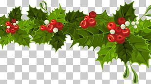 Common Holly Christmas Decoration Mistletoe PNG