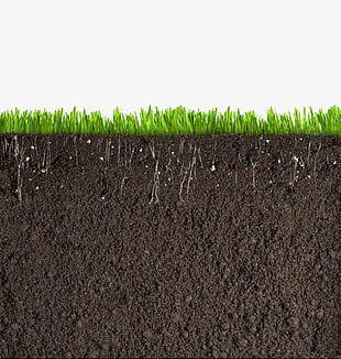 Grass Soil Cross Section PNG