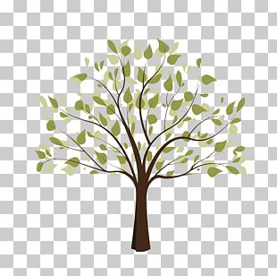 Tree Of Life Free Content PNG