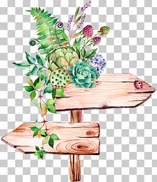 Succulent Plant Watercolor Painting Illustration PNG