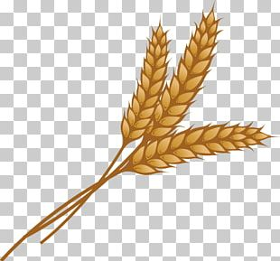 Wheat Ear Grain PNG