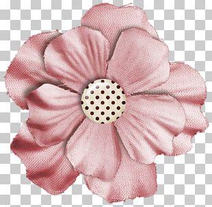 Cut Flowers Rose Family Pink M Petal PNG