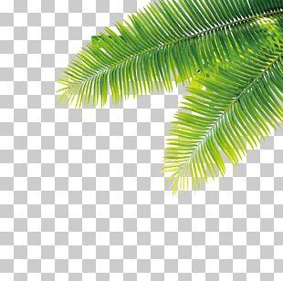 Tropics Plant Computer File PNG