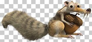 Scratte Squirrel PNG
