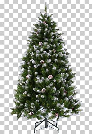 Christmas Tree Spruce Pine Fir PNG