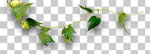 Craft Beer Leaf Plant Stem Wholesale PNG