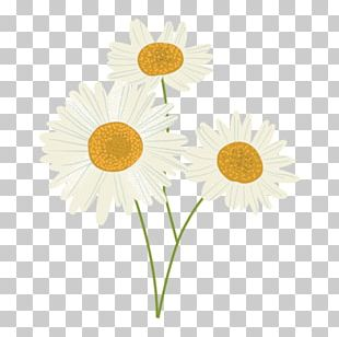 Oxeye Daisy Sunflower M Petal PNG