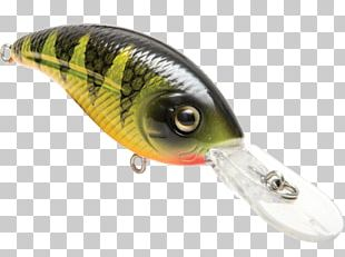 Spoon Lure Perch Oily Fish AC Power Plugs And Sockets PNG
