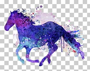 Pony Horse Watercolor Painting PNG