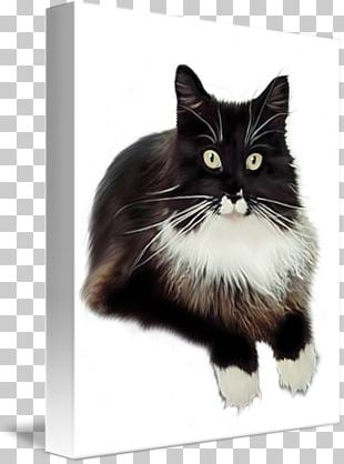 Norwegian Forest Cat Whiskers Cymric Kitten Maine Coon PNG