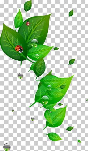 Leaf Green PNG