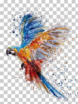 Parrot Bird Watercolor Painting Drawing PNG