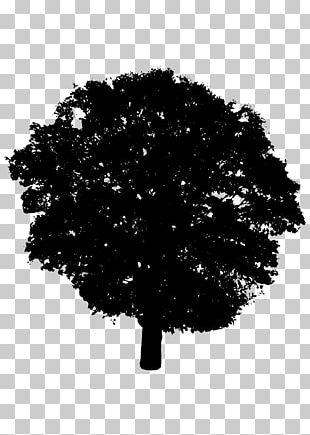 Silhouette Tree Shrub PNG