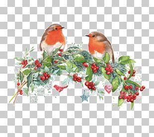 Christmas Robin Drawing Pin PNG