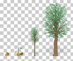 Tree Oak Wood Plants PNG