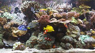 Blu-ray Disc Reef Aquarium Coral Reef PNG