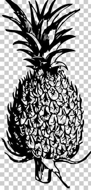Pineapple Blog Black And White PNG