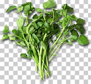 Nutrient Leaf Vegetable Watercress Eating Food PNG