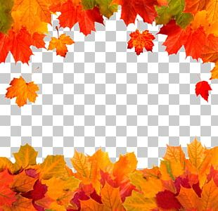 Autumn Leaf Color Red Maple PNG