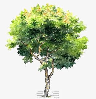Hand-painted Trees PNG